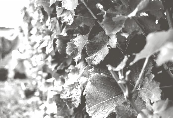 vins_reserve