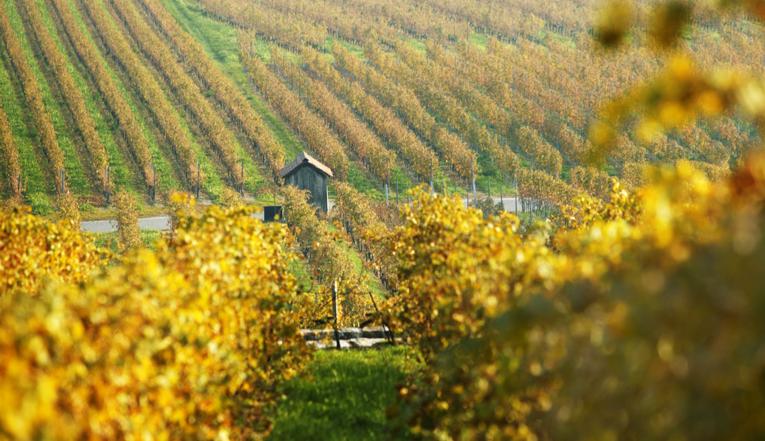 vins_terroir