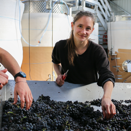 laura paccot colombe vendanges 2019