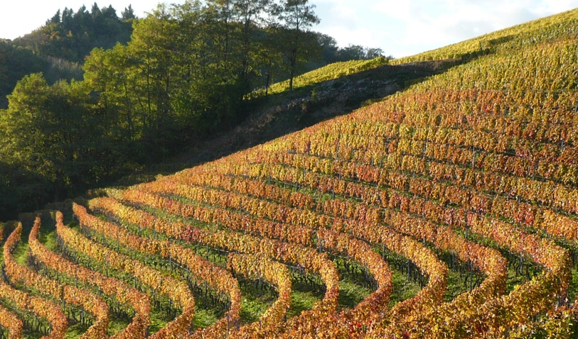 homepage_lacolombe_vignes